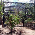 rockhampton zoo chimpanzee enclosure